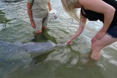 Delfine füttern Tin Can Bay - Delfin nimmt Fisch
