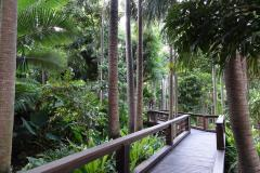 South Banks - Rainforest Walk