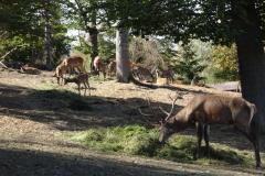 Tiere im WildTierPark Edersee