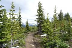 Jasper-Bald-Hills-Trail