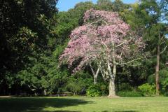 Botanischer-Garten-Sarasota