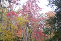 Herbstfärbung-Blue-Ridge-Parkway