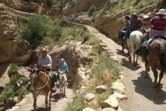 Grand Canyon: Wanderung mit Maultieren