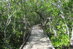 Mangroven-Key-West