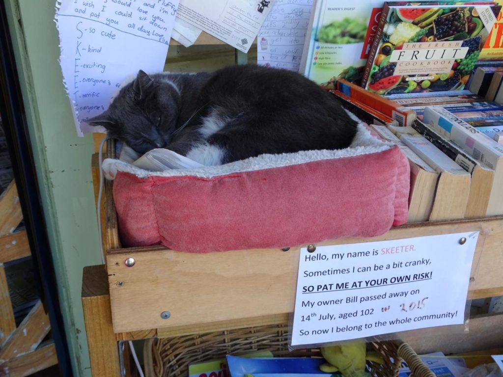 Kangaroo Valley - Skeeter die Katze
