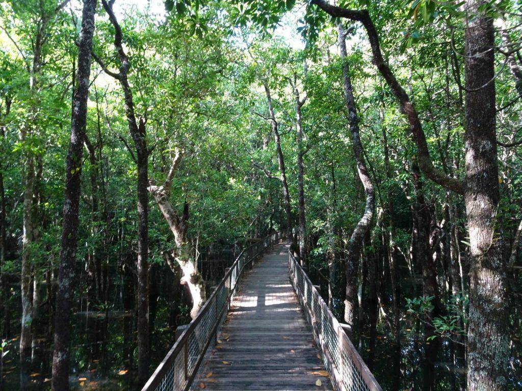 Marrja Boardwalk Mangroven