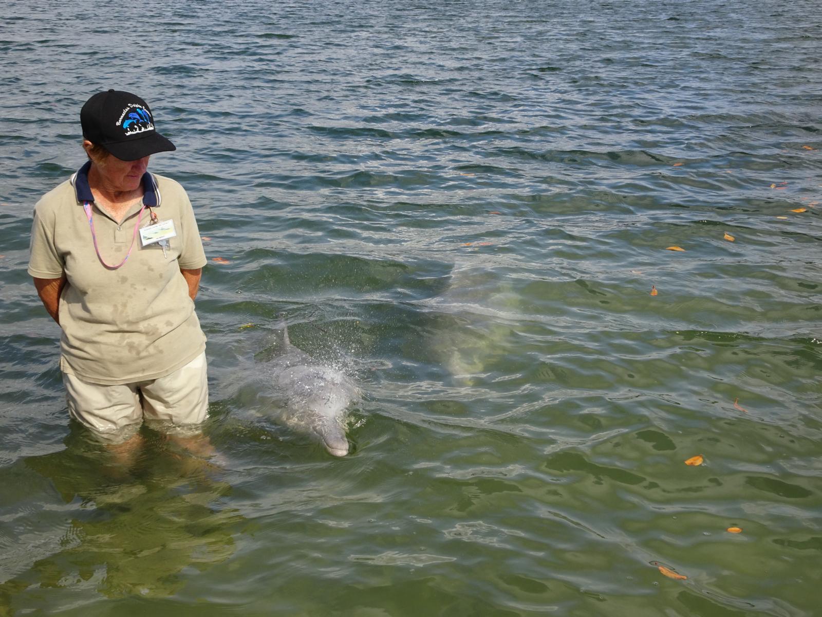 Delfine füttern Tin Can Bay