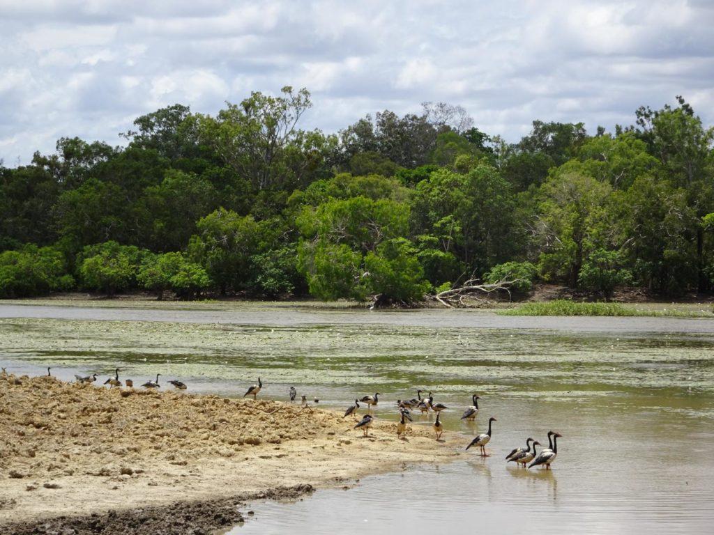 Lakefield Nationalpark - Lagune