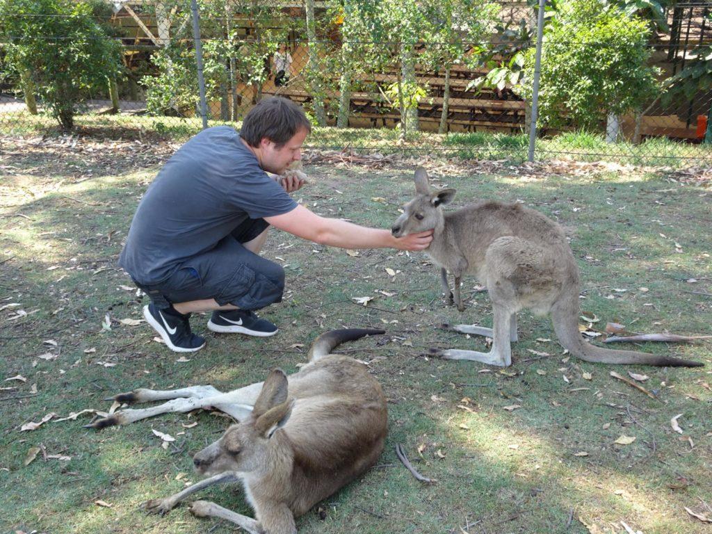 Lone Pine Koala Sanctuary - Kängurus füttern