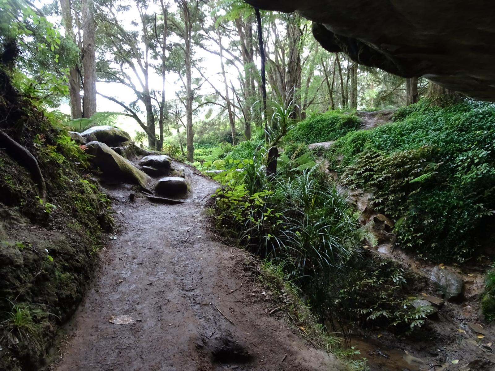 Waipu Caves - Ausgang