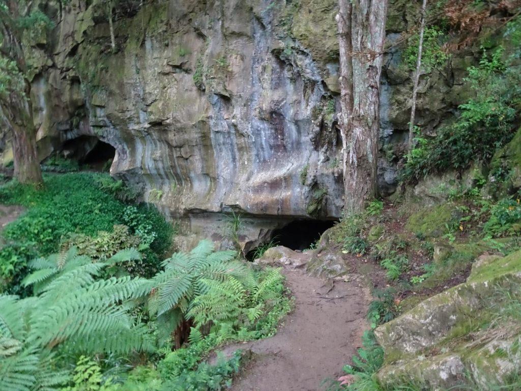 Waipu Caves - Eingang