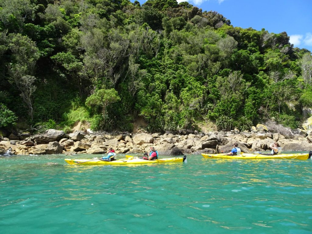 Kayak Abel Tasman - Vorbei an den Seelöwen