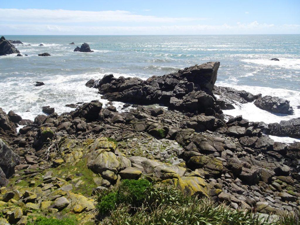 Seelöwenkolonie Cape Foulwind