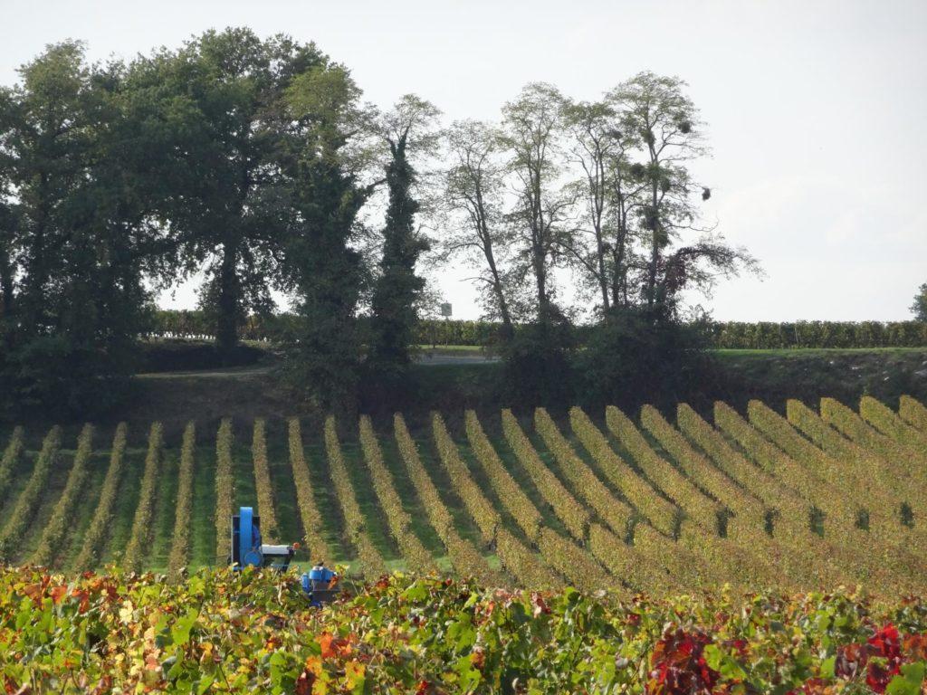 Weinfelder bei St-Émilion