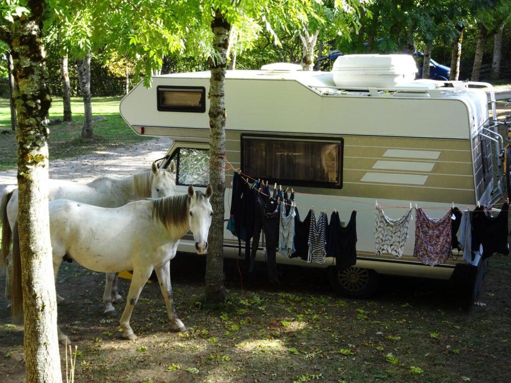 Picos de Europa - Pferde auf dem Campingplatz