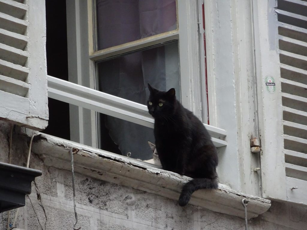 Bayonne - Katze im Fenster