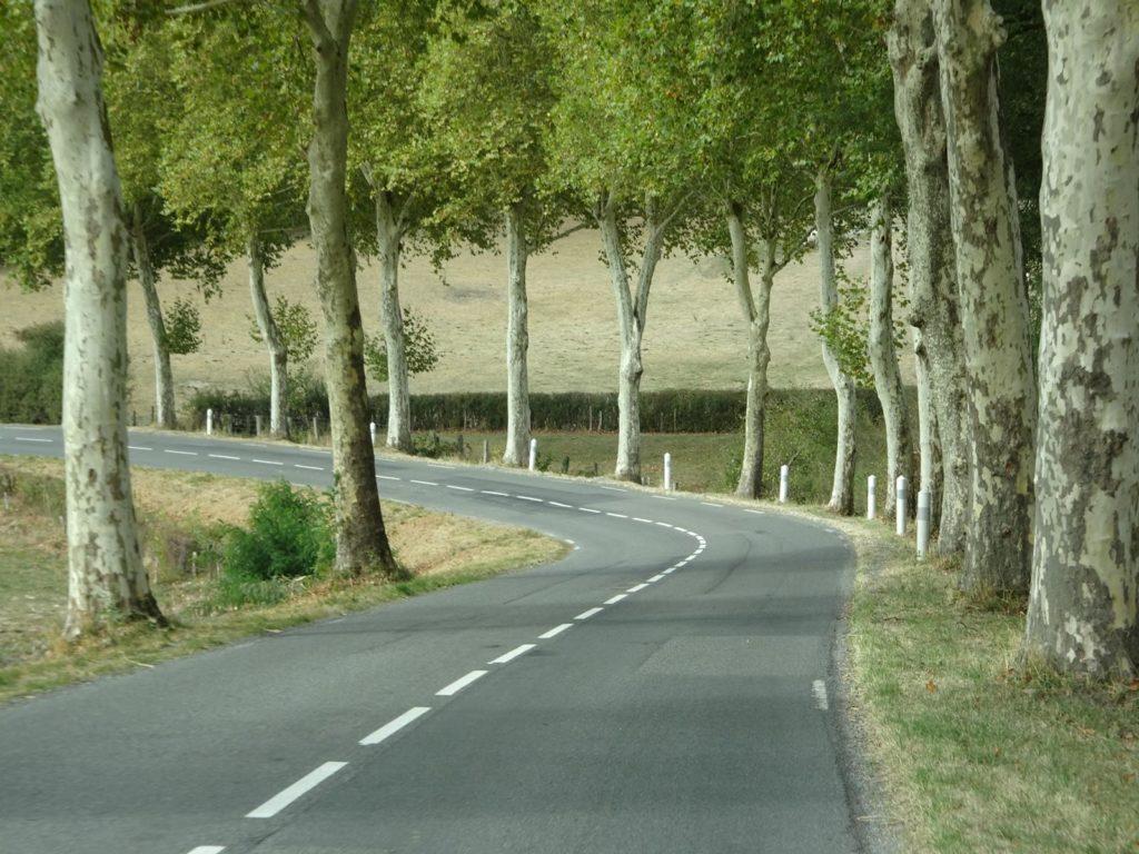Auf dem Weg in die Auvergne - Platanen-Allee