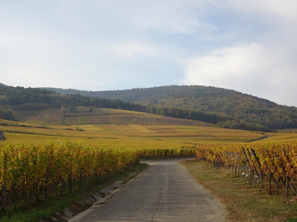Elsass - Weinberge im Herbst