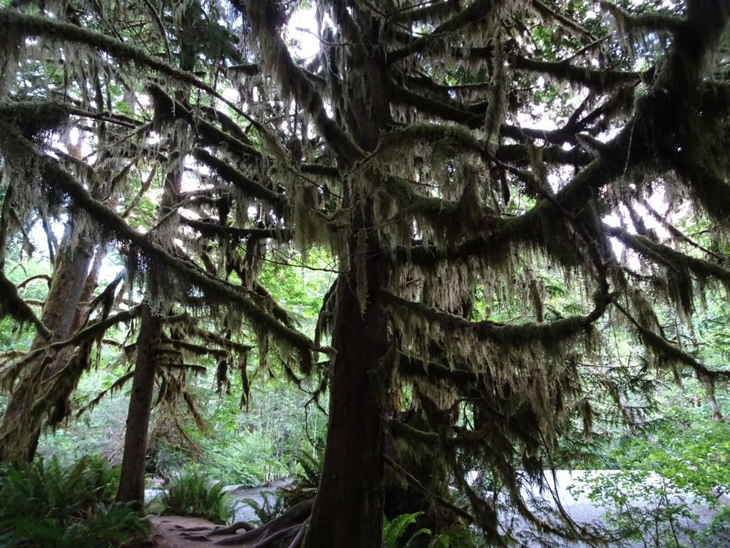 Cathedral Grove 4