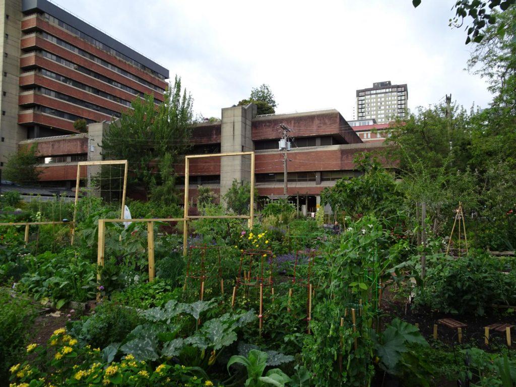 Urban Gardening Davie Street